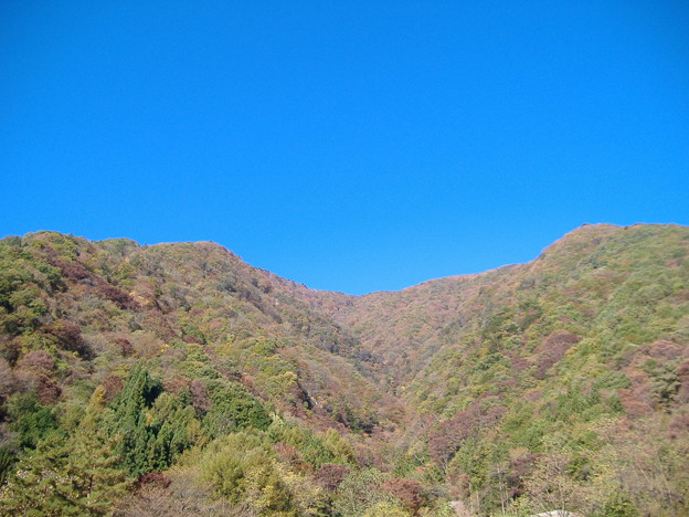 写真: 大鹿村