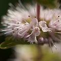 写真: 何かの花