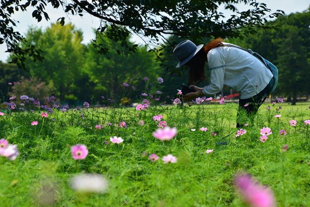 秋桜と・・・