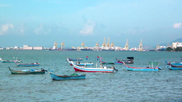 漁船を見ているキリンの群れ。