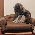 Photos: 自作ソファー