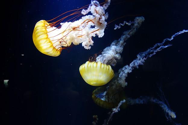 加茂水族館DSC03994