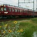 Photos: ヒマワリと鮮魚列車
