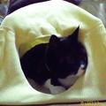 Photos: 09_04猫テント2