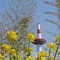 菜の花タワー