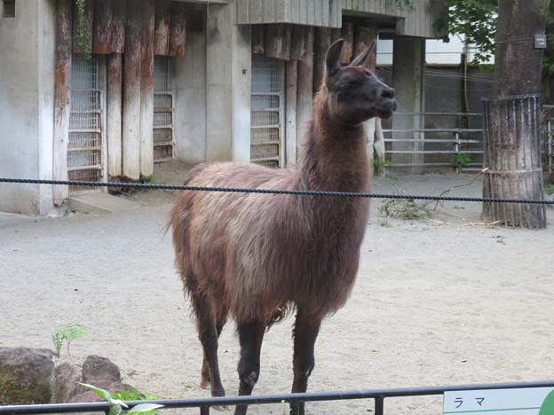 上野動物園60