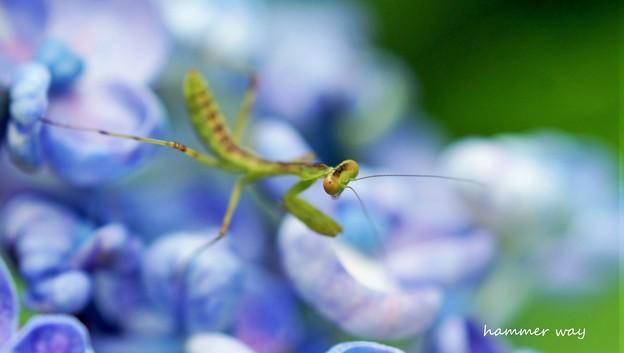 僕の一番好きな昆虫