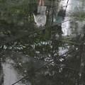 雨に歩けば♪