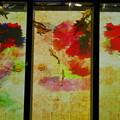 Photos: 江戸・金魚の涼