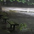 Photos: 雨音