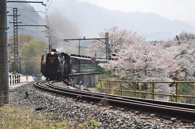 パレオエクスプレス with 桜 その2