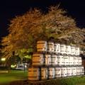 サッポロビール園の夜桜