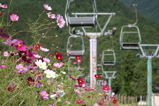 スキー場の秋