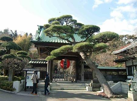 鎌倉 長谷寺-240111-1