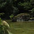 日本庭園_東京 F2729