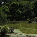 日本庭園_東京 F2740