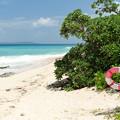 小さな島の小さなビーチ