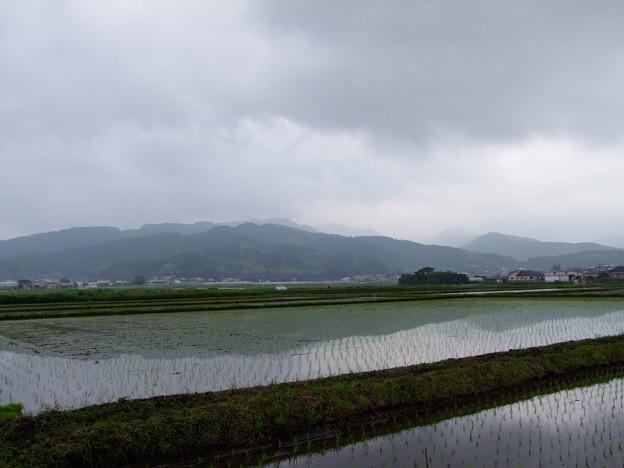 水田の景色