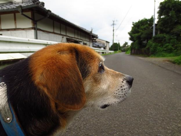 散歩に行きたいな~