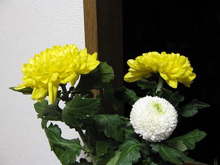 重陽は菊の節句