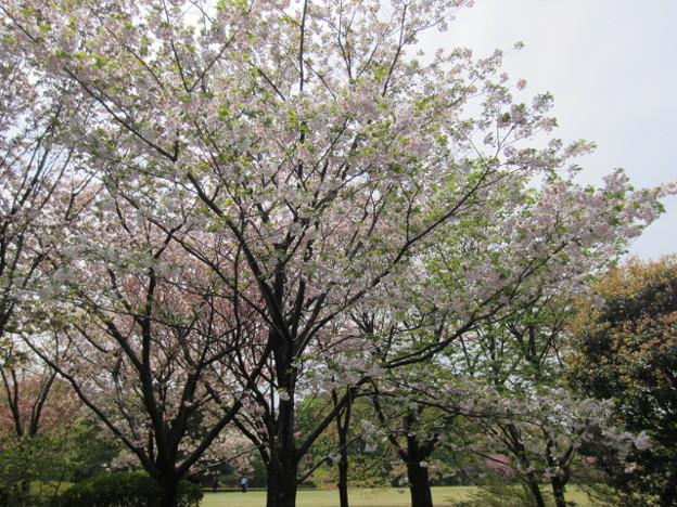 11.04.21.皇居東御苑(江戸城)
