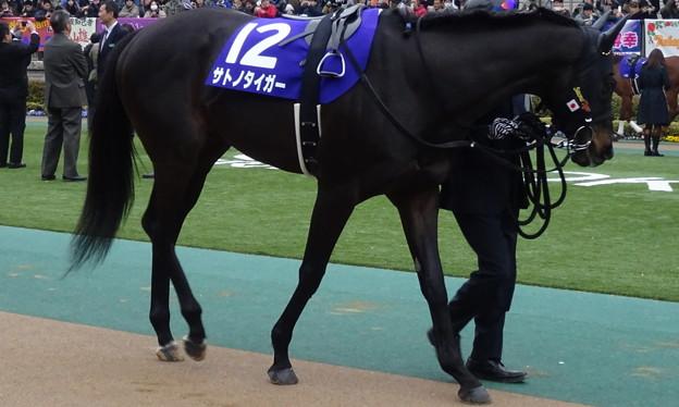 サトノタイガー(1回東京8日 11R 第32回 フェブラリーステークス(GI)出走馬)