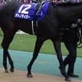 Photos: サトノタイガー(1回東京8日 11R 第32回 フェブラリーステークス(GI)出走馬)