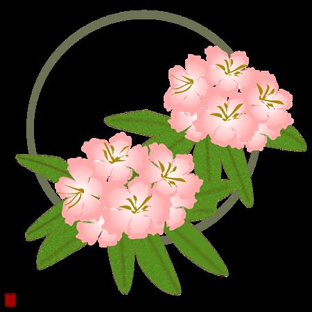 シャクナゲの画像 p1_25