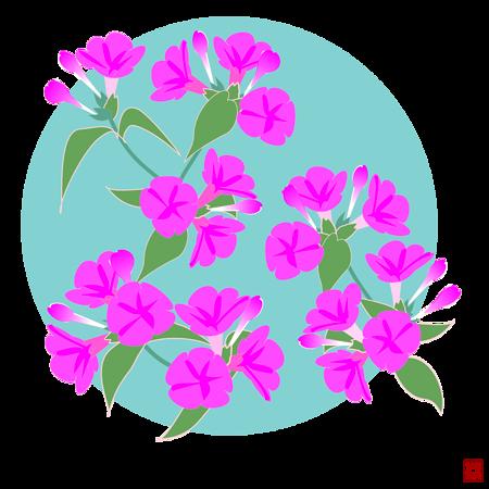 オシロイバナ