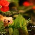 Photos: ~ジャングル・テーブル~