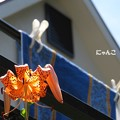 Photos: ~洗濯日和~
