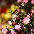 Photos: ~baby pink~