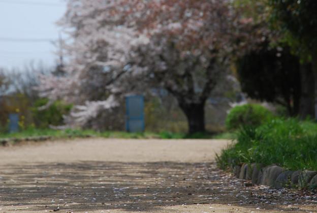 春の忘れ物・・・