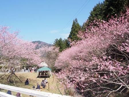 syunnkokuji_edohigan33