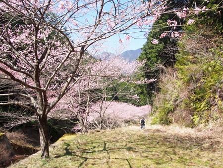 syunnkokuji_edohigan36
