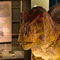 写真: 福井恐竜博物館