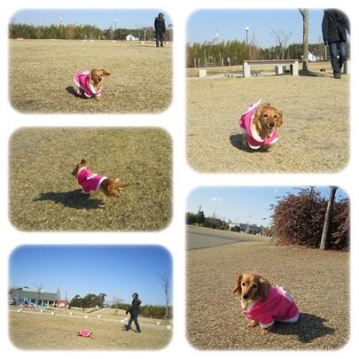 20111231 今年ラストのお散歩☆