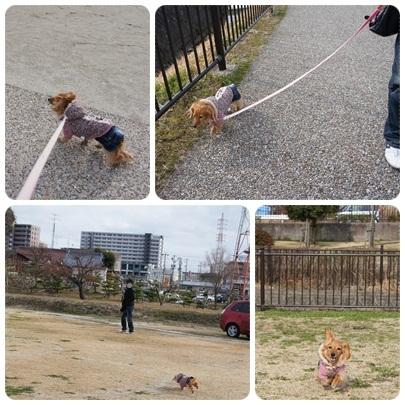20120310 お散歩