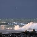 写真: 冬の日本海とカモメ
