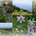 白山高山植物園(2)
