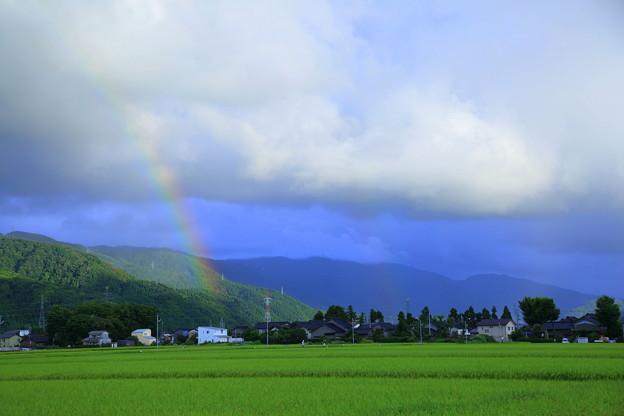 収穫間近の水田に架かる虹