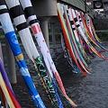 Photos: 浅野川を泳ぐ鯉のぼり(4) 友禅流しのように^^