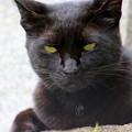 写真: ネコ