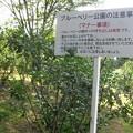 Photos: 15.11 ブルーベリー公園のマナー事項s