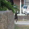 Photos: 待って~!