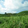 Photos: midori