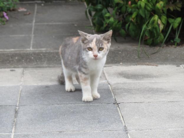 Photos: 子猫(1)