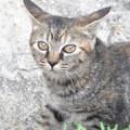 Photos: 子猫(2)
