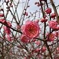 春の予感♪