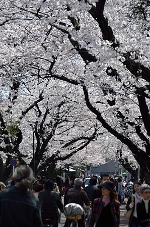 花見客の路